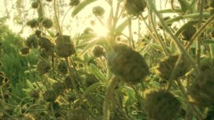 Green Plants in Wilderness at Sunrise Stock Footage
