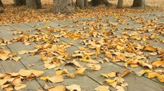 Wind Scatters Leaves on the Ground Stock Footage