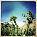 Cactus growing in desert Stock Photos