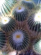 Hairy cactus plants outdoors Stock Photos