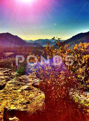 Stock photo of Plant growing in rural valley