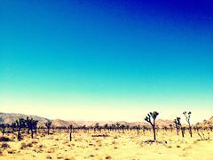 Trees growing in desert landscape Stock Photos