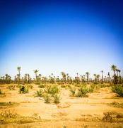 Trees and plants in desert landscape Stock Photos