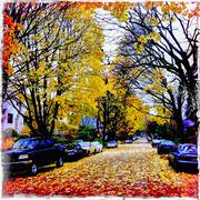 Distressed photograph of autumn leaves on street Stock Photos