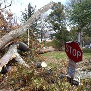 Dilapidated ''stop' sign and fallen tree Stock Photos