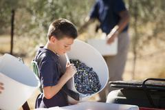 Caucasian boy working in olive grove - stock photo