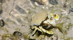 Crab  on the sand Stock Footage