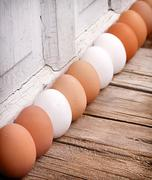 brown and white eggs lined up - stock photo