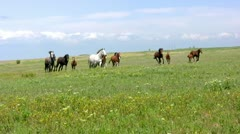 Herd and steppe Stock Footage