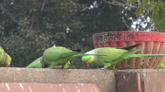 Green parrots on park fence in India Stock Footage