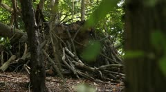 Tree trunks and cut branchs 02 Stock Footage