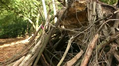 Logs and branches piled up on a fallen tree trunk Stock Footage