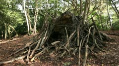 Logs and branches piled up on a fallen tree trunk 03 Stock Footage