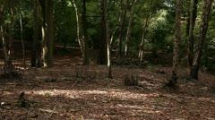 Woodland scene 01 Stock Footage