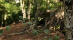 Woodland scene close up leaves 01 Stock Footage