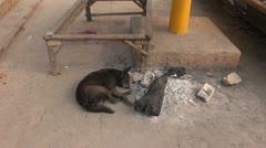 Dog sleeping near fire ash in Varanasi street, India Stock Footage