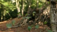 Woodland scene close up leaves 03 Stock Footage