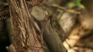 Woodland scene close up leaves 05 Stock Footage