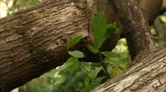 Woodland scene close up leaves 08 Stock Footage