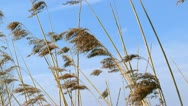 Blades of grass waving in wind close up Stock Footage