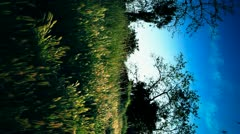Vertical Countryside Nature Scene Stock Footage