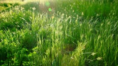 Lush Field Close up Outdoors Stock Footage