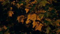 Orange Fall Leaves at Night Stock Footage