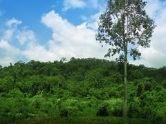 Wild jungle under a cloudy blue sky near Angkor Wat temples, Cambodia. Stock Photos