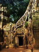 Stock Photo of Giant trees covering the stones of the fascinating temples in Angkor Wat