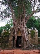 Giant trees covering the stones of the fascinating temples in Angkor Wat Stock Photos