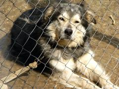 Animal cruelty - stock photo