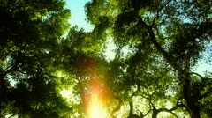 Looking up Enchanted Forest Lens flare Stock Footage