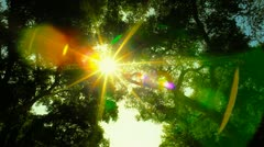 Looking up in Enchanted Day Forest Stock Footage