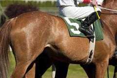 Jockey leads number five horse to start gate at racetrack Stock Photos