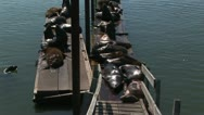 Sea lions resting on dock Stock Footage