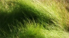 Tall grass swaying in wind with glow - stock footage