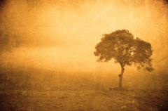 Grunge image of a tree on a vintage paper Stock Photos