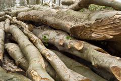 Pile of lumber Stock Photos