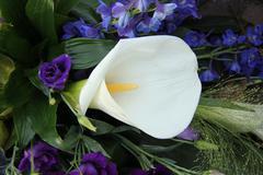 Calla lily and blue bridal bouquet Stock Photos