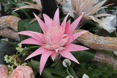 Pink bromelia in a flower arrangement Stock Photos