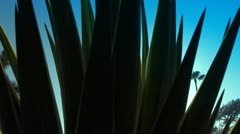 Sunlight and Lens Flare through Aloe Plant - stock footage