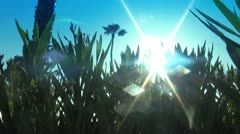 Sunlight and Lens Flare through Plants - stock footage