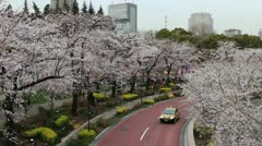 Cherry blossom lined road in Tokyo Stock Footage