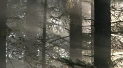 Forest_Mist-02 Stock Footage