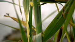 Close Up of Plants at the Beach Stock Footage