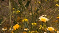 Outdoor Plant life Afternoon Stock Footage