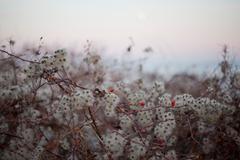Moonlight berry - stock photo