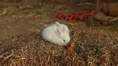 Cute little white rabbit eat carrots Stock Footage