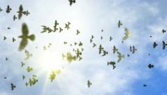 Animated transition flying flock of pigeons with isolate alpha Stock Footage