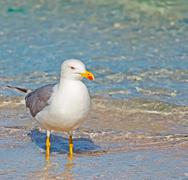 seagull and foreshore - stock photo